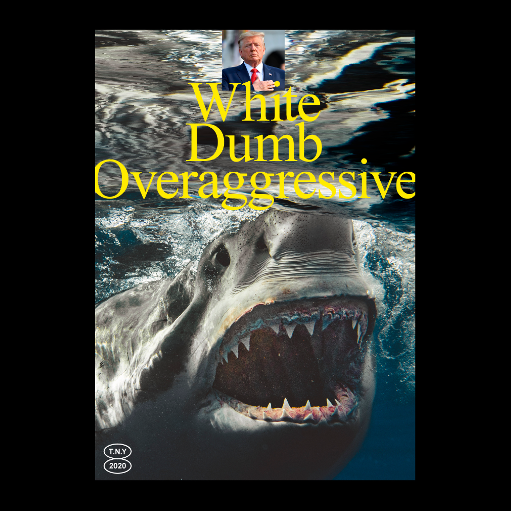 timesnewyoman - sharks